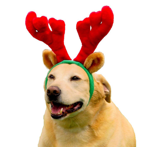 Dog  Antlers Red   Small & Large