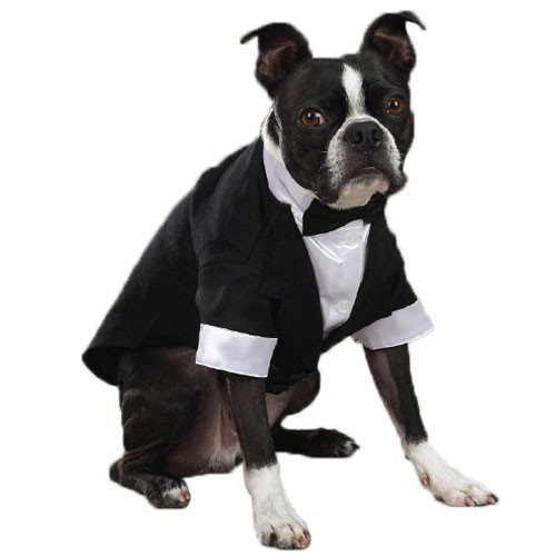 Yappy Ever After Tuxedo Model