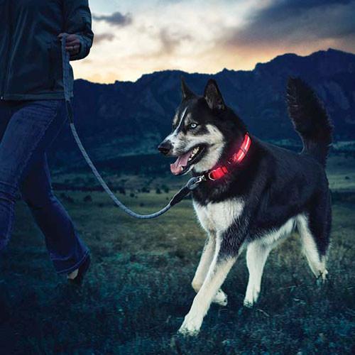 Nite Dawg LED Dog Collar