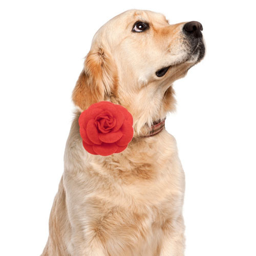 Dog Birthday Cakes Weddings Seasonal Gifts Bergen County New