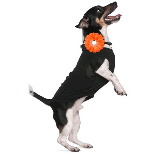 Orange Mini Daisy Collar Bud