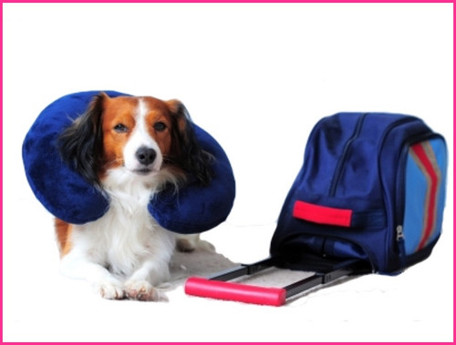 Traveling with your Dog Safety Tips