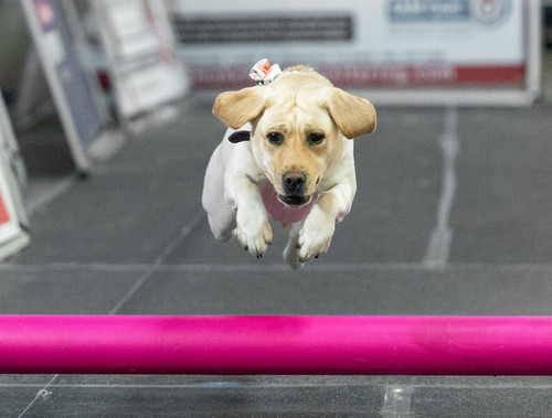 Lure 101: A Fun Sport with your Dog