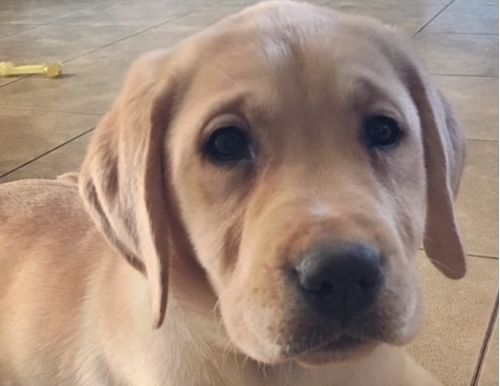 New Pet Owners Guide: Top 5 things to do before bringing home a puppy.