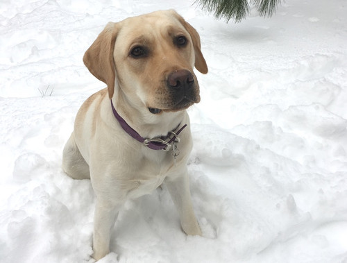 Fun Things to do in the Snow with Your Dog