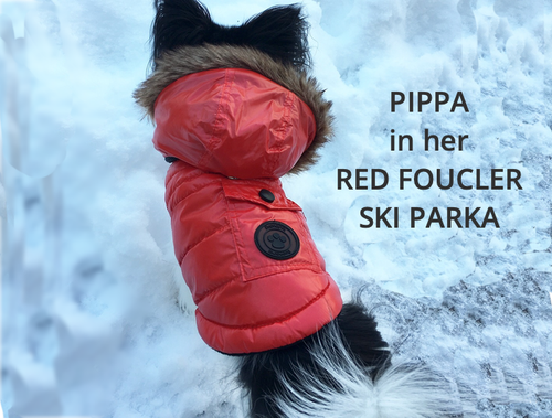 What does your Dog Need this Winter?