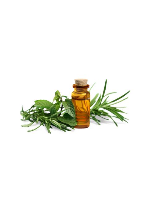 Fungus oil 50 ml