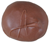 creme-apricot-cropped.png
