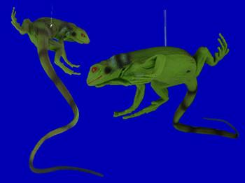 Baby Iguana Ornament inset