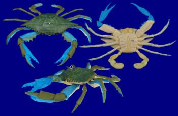 Blue Crab Ornament inset