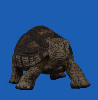 Break Resistant Tortoise Figurine front