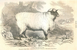 "1867 RCA Hampshire Down Ram ""Chancellor,"" Long Island"