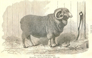 "1867 RCA Merino Ram ""Judge Lawrence,"" Sydney, Ohio"