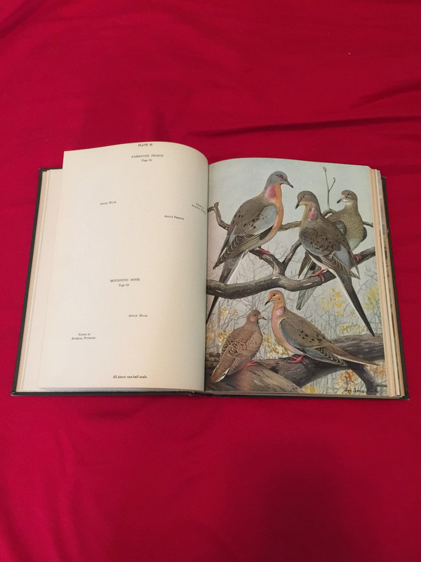 Color plate image of passenger pigeons and mourning doves in volume two.