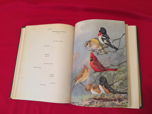 Color plate image of cardinal, rose-breasted grosbeak, and towhee.