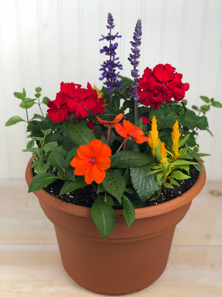 Mixed Annuals Planter