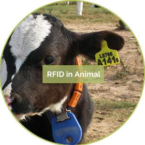 13.animalrfid.jpg