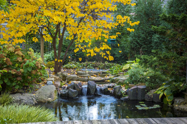 Enjoy Your Water Feature During Autumn