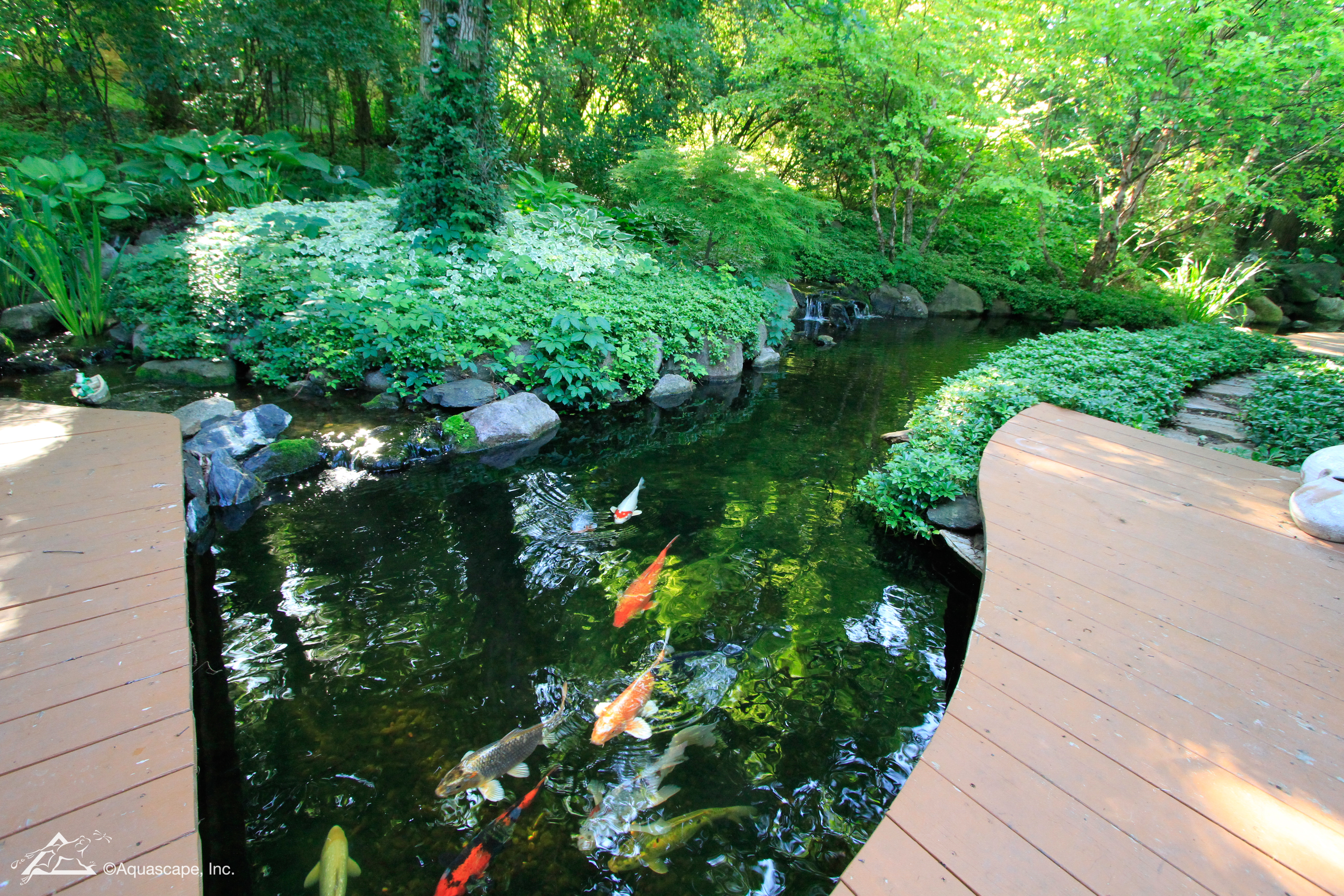 QUIZ: What Type of Pond Owner Are You?