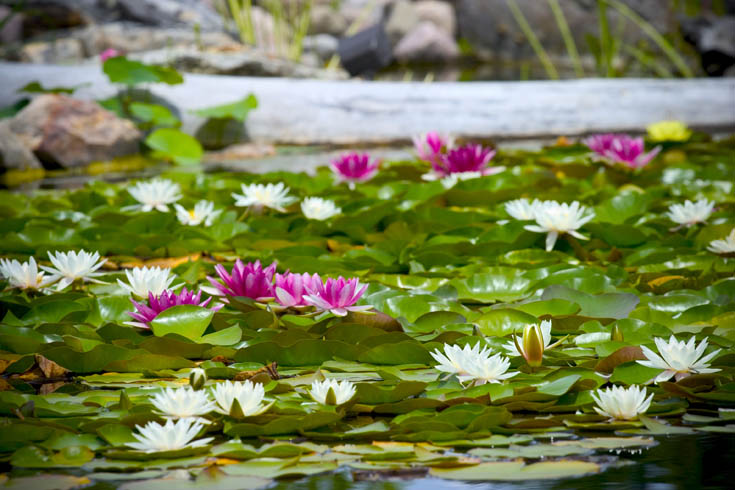 Caring for Aquatic Plants in Autumn