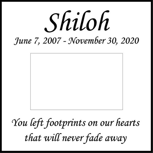 "Memories Step Stone 11.5""x11.5"" Shiloh_Honorthy pet"