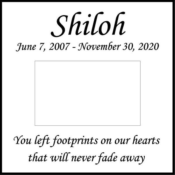 "Memories Step Stone 11.5""x11.5"" Shiloh_Honorthy pet"