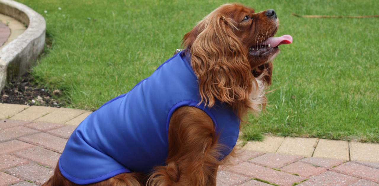 Waterproof dog coats uk
