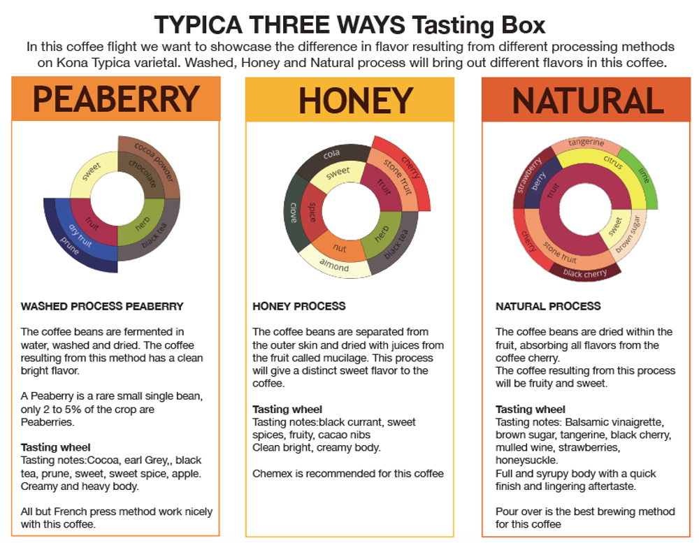 Typica Three Ways