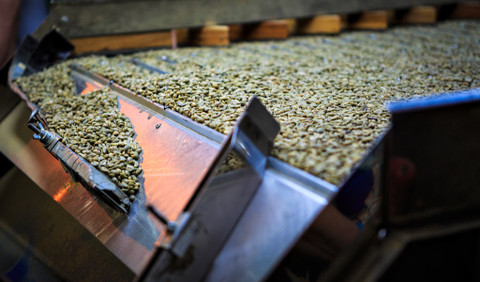 Why Sort Coffee Beans?