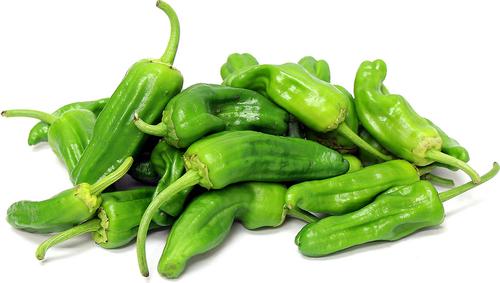 Pepper Chili PADRON (pints)