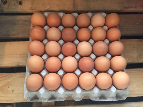 Biodynamic Humane Organic Local Fertile Chicken Eggs AA LG Brown, 30 eggs/Bulk Flat
