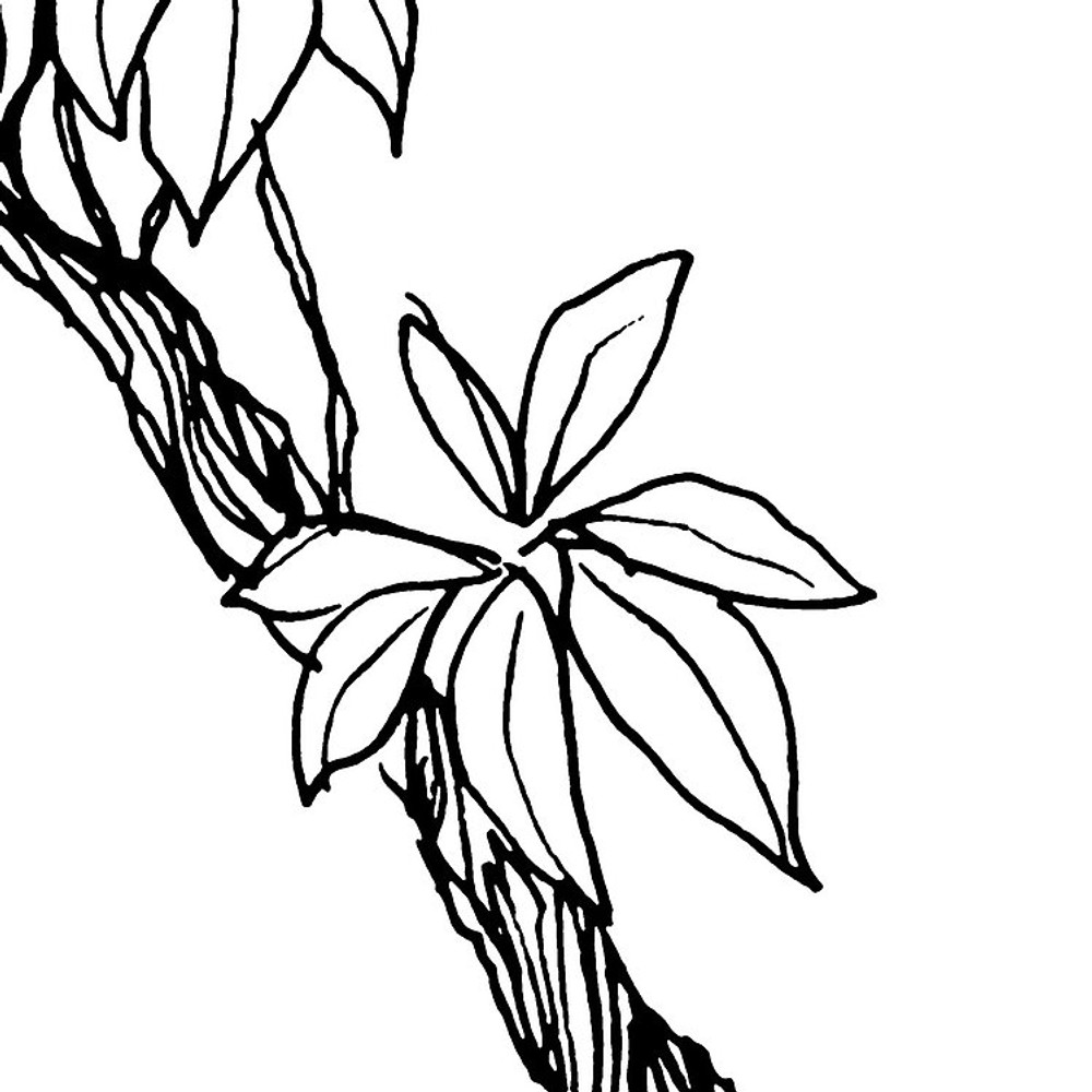 MURAL - BLANCA (4.0m x 2.8m)