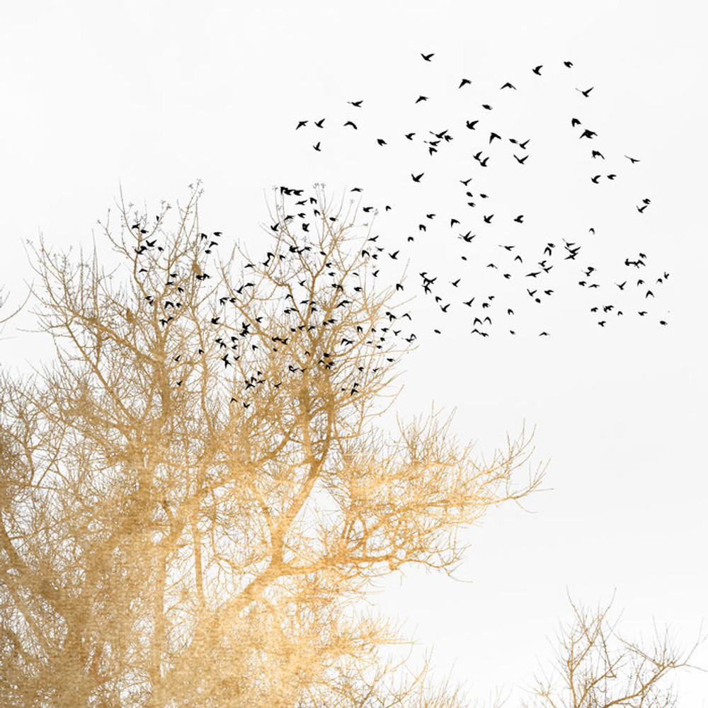 MURAL - GOLDEN BIRDS (PER SQM)