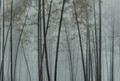 Mural - In The Bamboo 1 (4m x 2.7m)