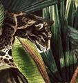 Mural - Borneo Leopard (Per Sqm)