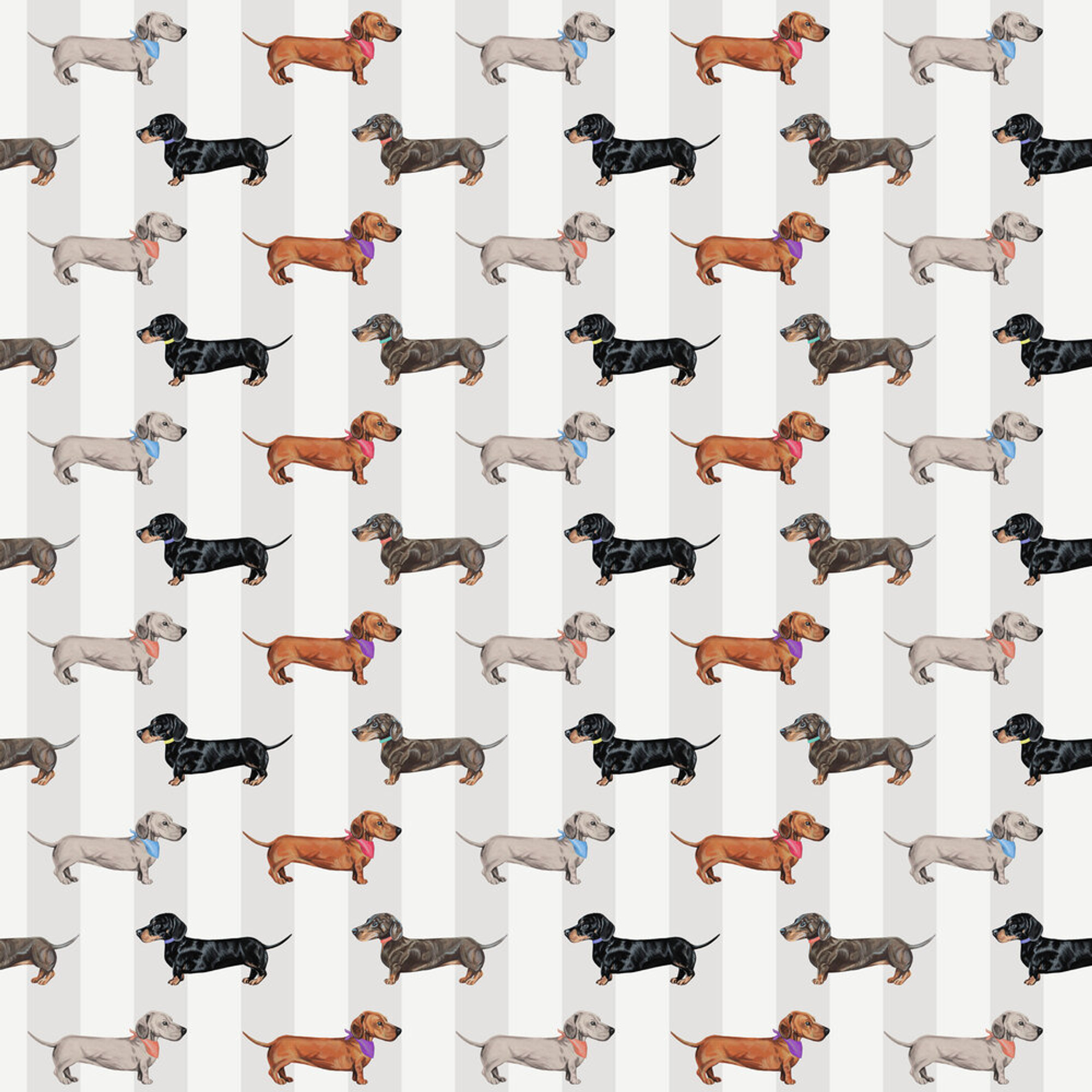 Graduation Collection Dachshund Wallpaper Natural