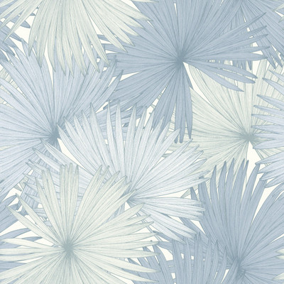 Coconut - Sky Blue