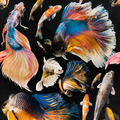Goldfish - Anthracite