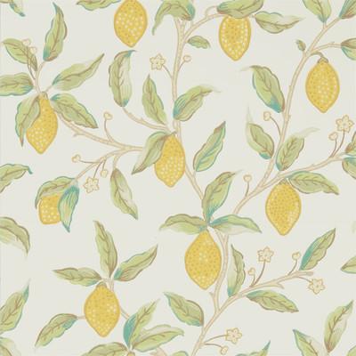 Lemon Tree - Bayleaf