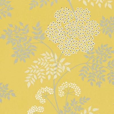Cowparsley - Yellow