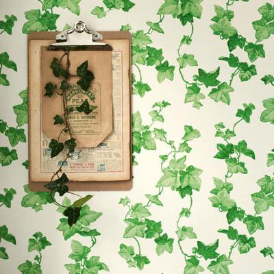 Hedera - Green