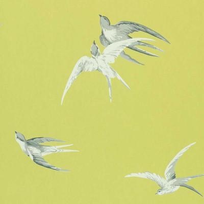 Swallows - Lime