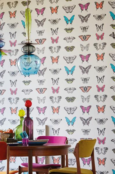 Papilio - Multi