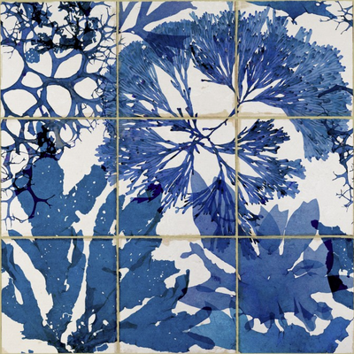 Algae In Blue