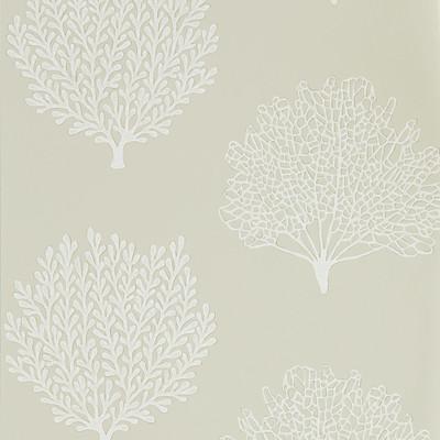 Coraline - Driftwood