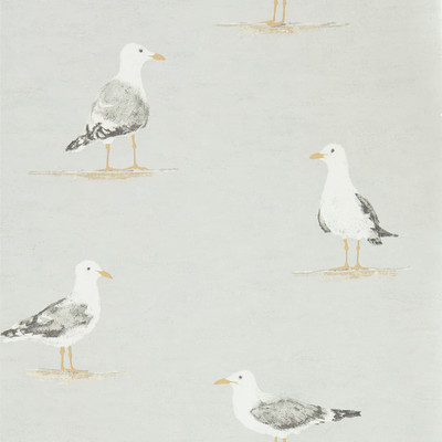 Shore Birds - Gull