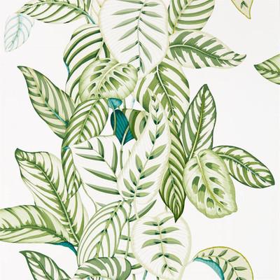 Calathea - Botanical Green