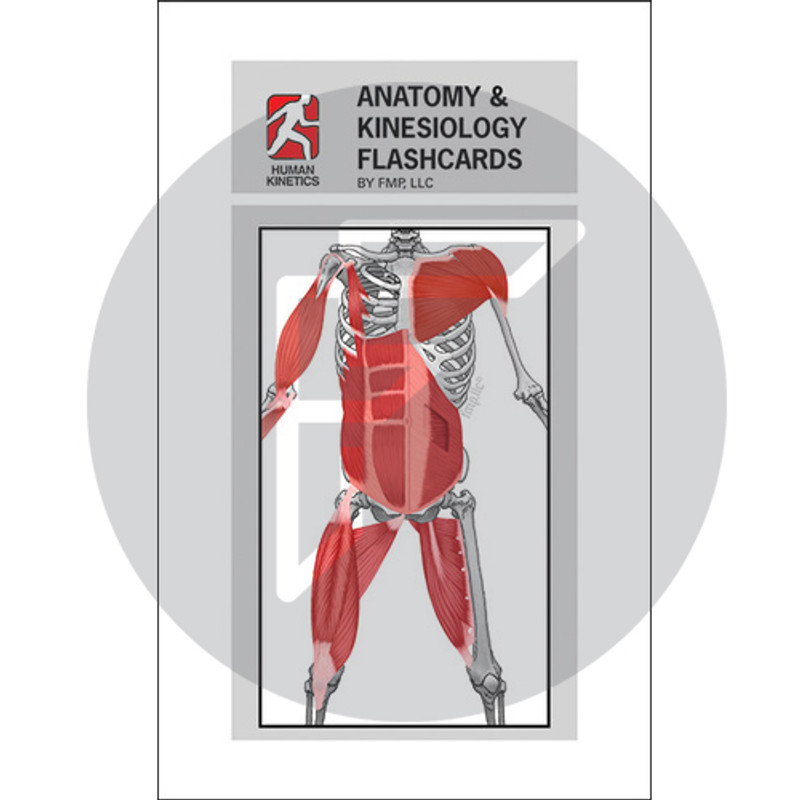 Anatomy Kinesiology Flash Cards