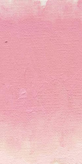 Williamsburg Dianthus Pink Oil Colour