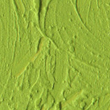 Cadmium Green Pale Pigment Stick